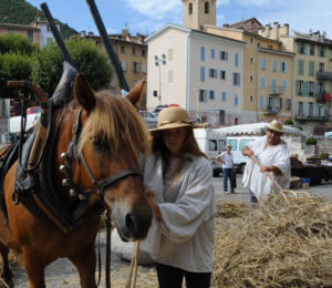 Marché paysan - Fête du terroir