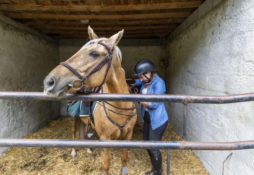 accueil chevaux route napoléon