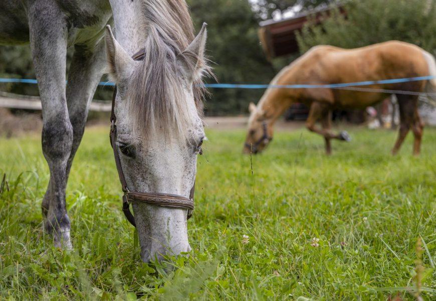 séjour à cheval Haute Provence