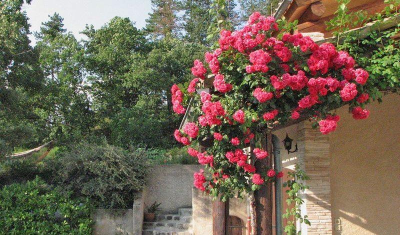 Au Jardin de Flore – Chambre Astrance