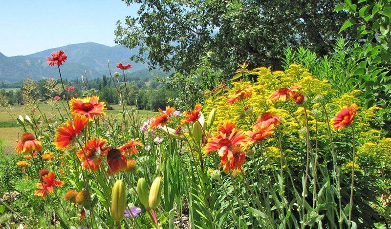 Au Jardin de Flore – Chambre Circée