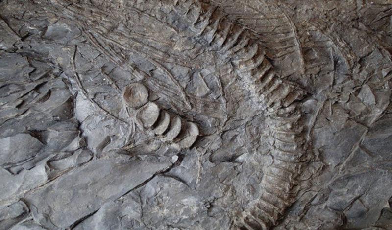 Ichtyosaure de la Mélaie