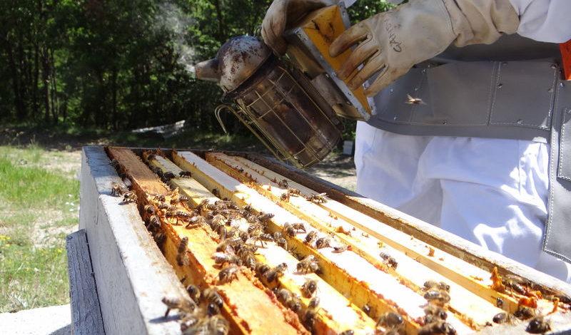 Atelier découverte des abeilles