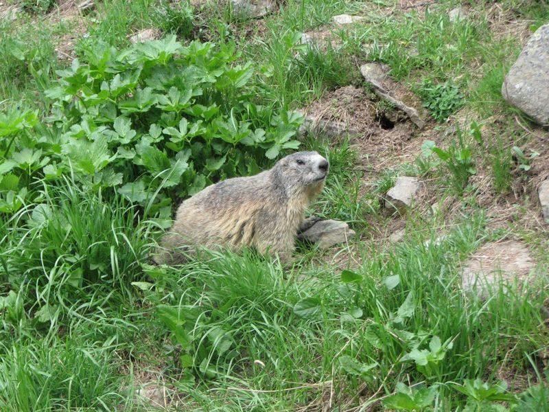 Route des Marmottes