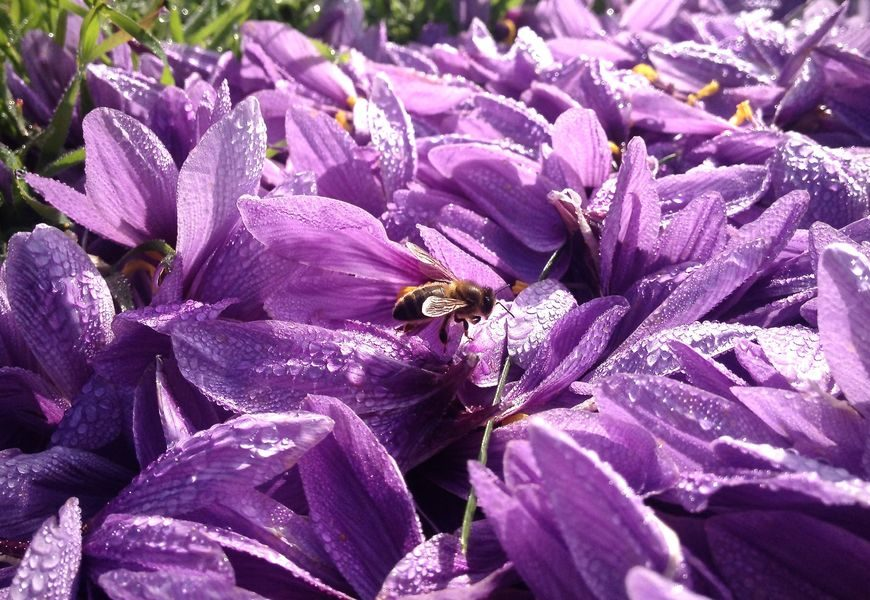 pétales&abeille